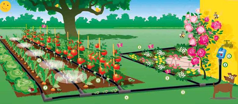 la giusta irrigazione